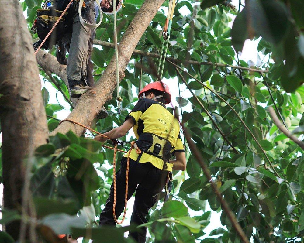 Tree Service Olathe - Emergency Tree Removal