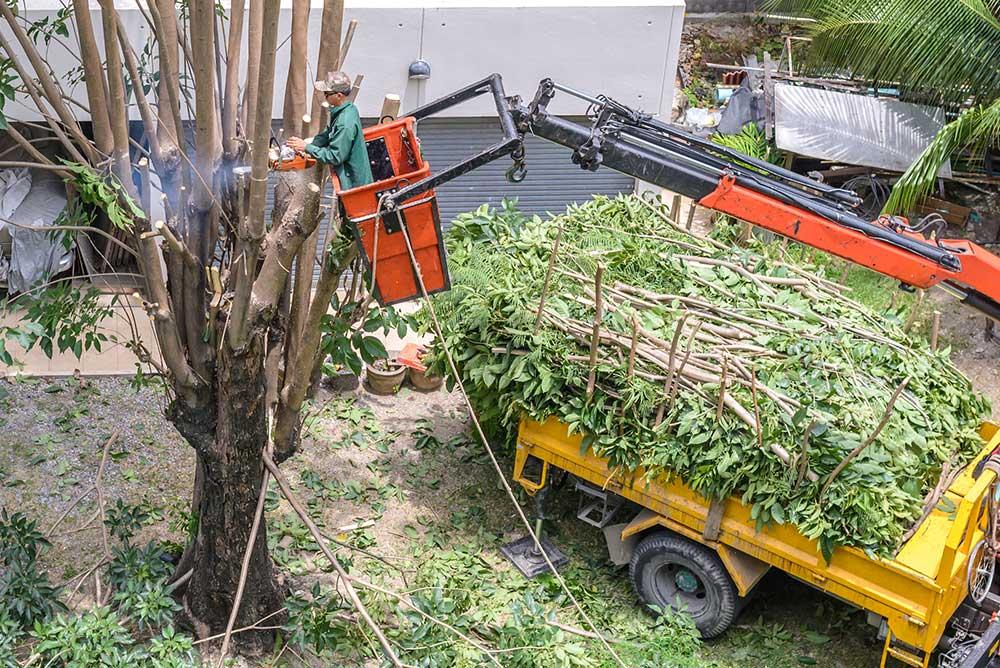 Tree Service Olathe - Tree Pruning