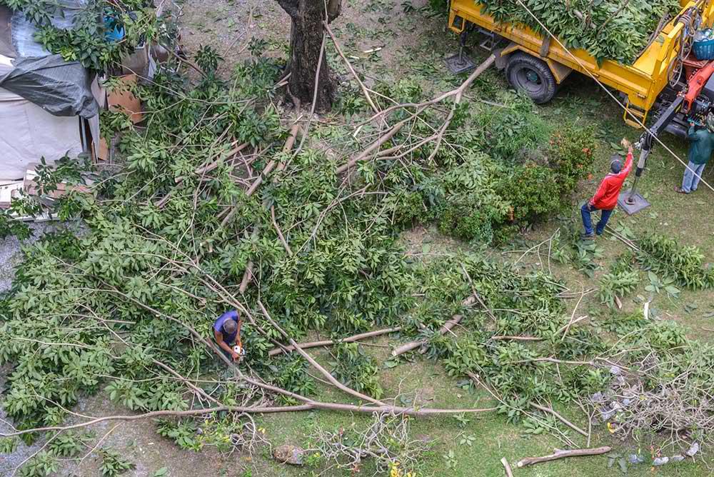 Tree Service Olathe - Tree Trimming
